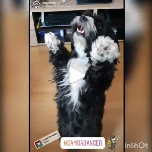 Hund tanzt Samba Video