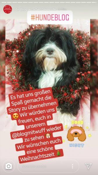 Instastory Dogblogger Adventskalender