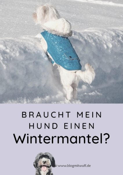 Pin Braucht mein Hund einen Wintermantel