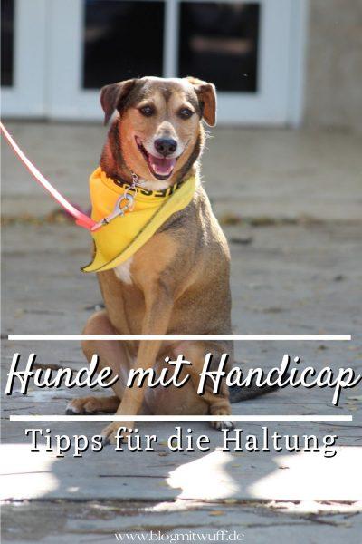 Pin Hunde mit Handicap