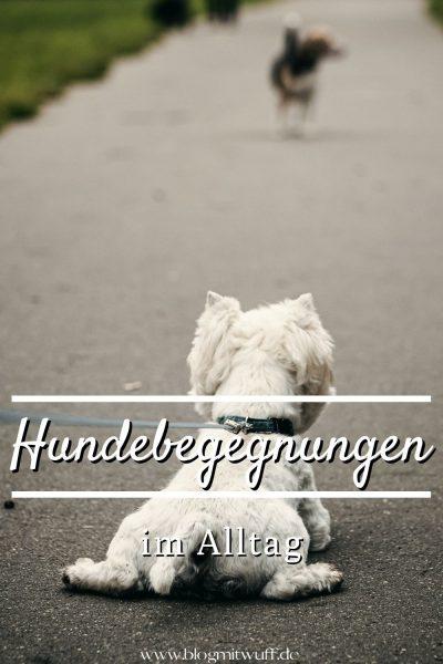 Pin Hundebegegnungen im Alltag