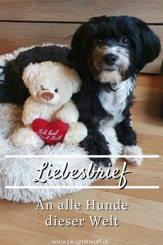 Pin Liebesbrief an alle Hunde dieser Welt