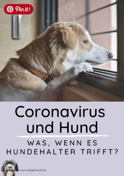 Pin it - Coronavirus und Hund Was wenn es Hundehalter trifft