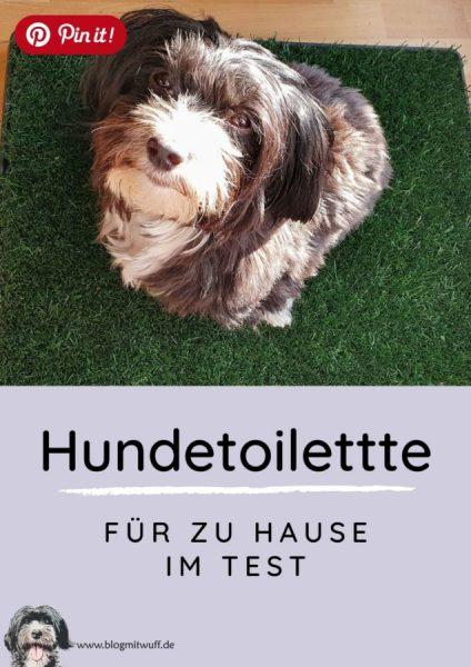 Pin it - Hundetoilette für zu Hause