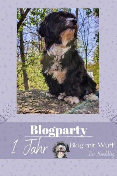 Pin zu Bloggeburtstag