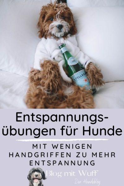 Pin zu Entspannung für Hunde