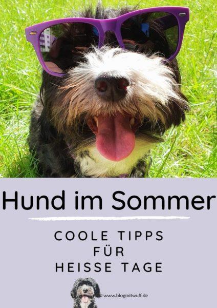 Pin zu Hund im Sommer - Coole Tipps für heiße Tage