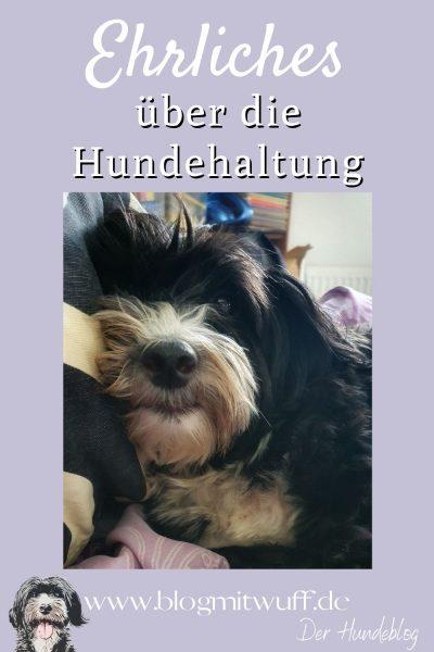 Pin2 Ehrliches über die Hundehaltung