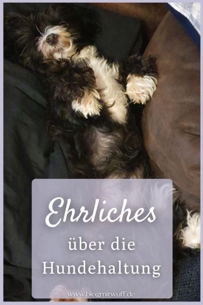 Pin3 Ehrliches über die Hundehaltung
