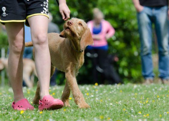 Positive und negative Verstärkung in der Hundeerziehung01