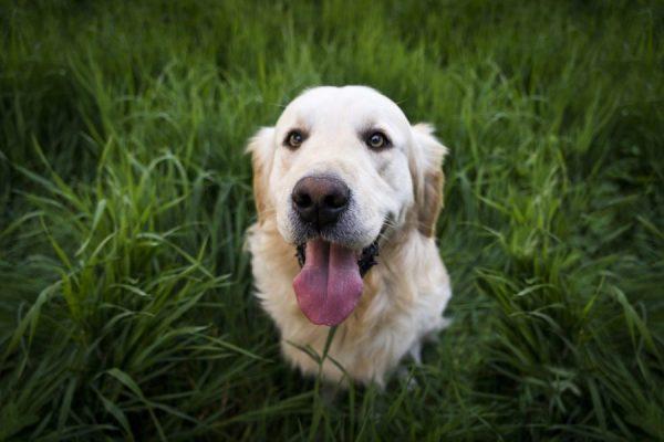 Positive und negative Verstärkung in der Hundeerziehung02