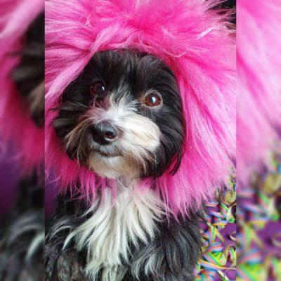 Hund zu Karneval