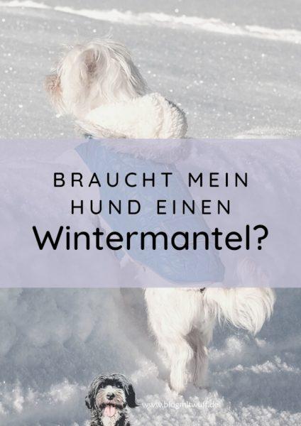Titelbild Braucht mein Hund einen Wintermantel