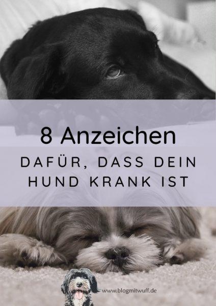 8 Anzeichen dafür dass dein Hund krank ist
