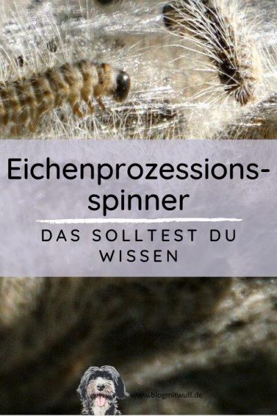 Titelbild zu Eichenprozessionsspinner