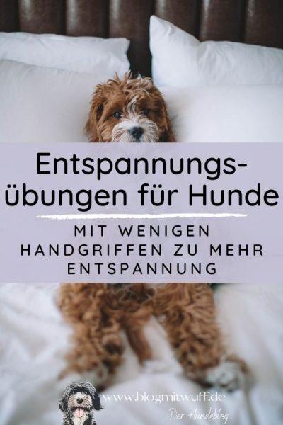 Titelbild zu Entspannung für Hunde