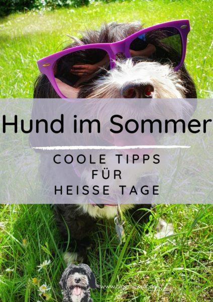 Titelbild zu Hund im Sommer - Coole Tipps für heiße Tage