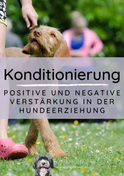 Titelbild zu Positive und negative Verstärkung in der Hundeerziehung