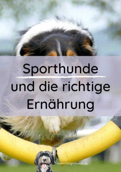 Titelbild zu Sporthunde und die richtige Ernährung