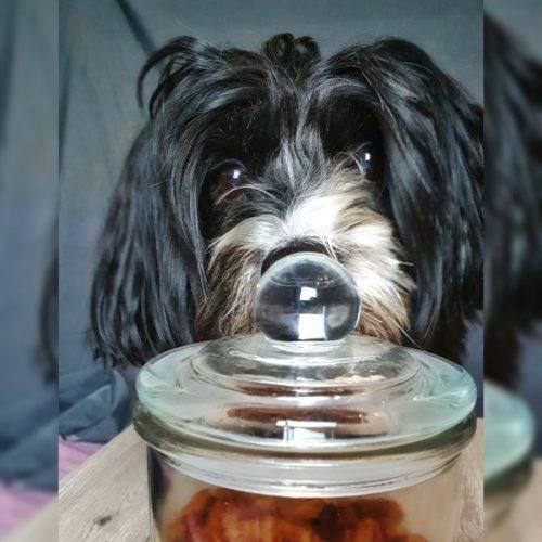 Wenn mein Hund reden könnte - Hund vor Leckerliglas
