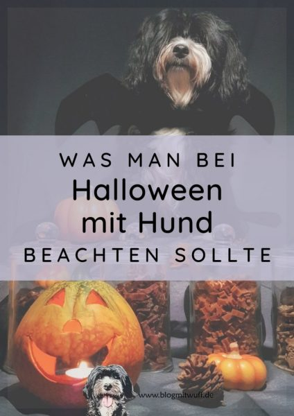 Titelbild zu Was man bei Halloween mit Hund beachten sollte