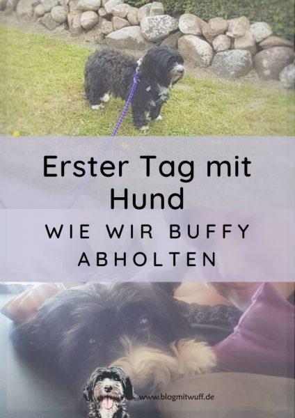 Titelbild zu Unser erster Tag mit Hund