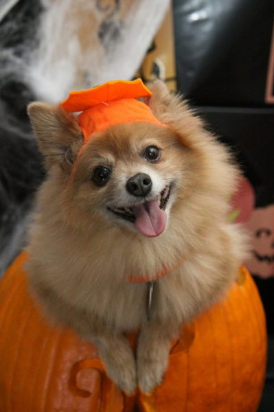 Hund in Halloweenverkleidung