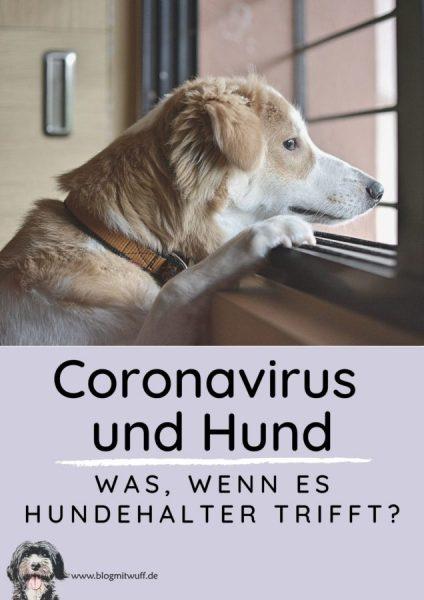 newPin zu Coronavirus und Hund