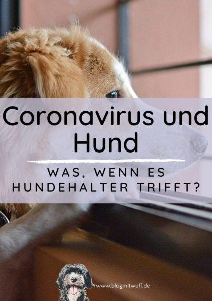 newTitelbild zu Coronavirus und Hund
