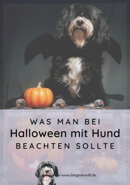 Pin zu Was man bei Halloween mit Hund beachten sollte