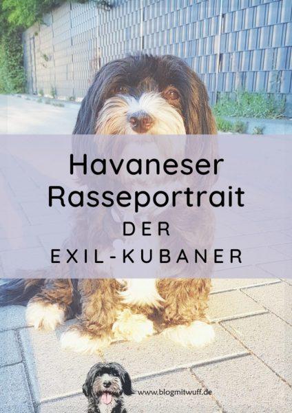 Titelbild zu Havaneser Rasseportrait