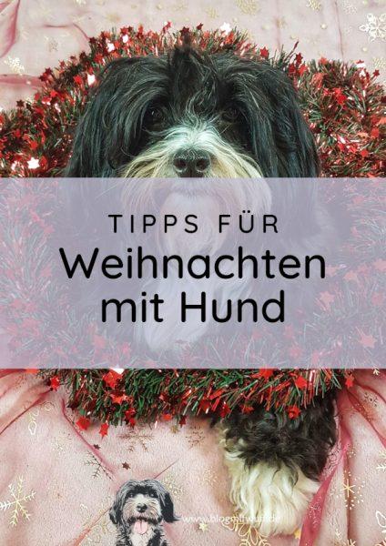 Titelbild zu Tipps für Weihnachten mit Hund