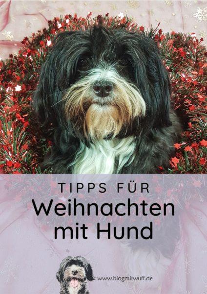 Pin zu Tipps für Weihnachten mit Hund
