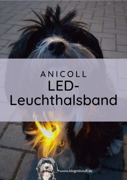 Titelbild für Anicoll LED Leuchthalsband Produkttest