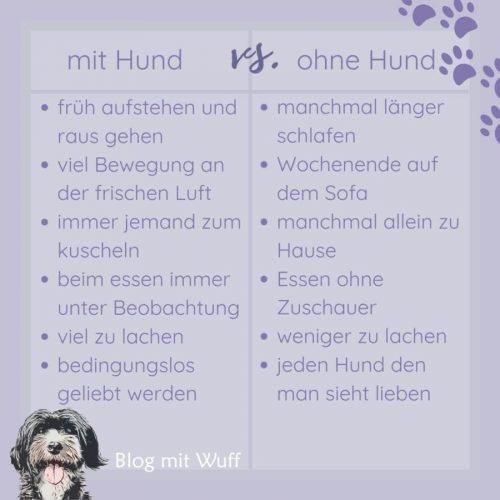 vergleich-mit-hund-vs-ohne-hund