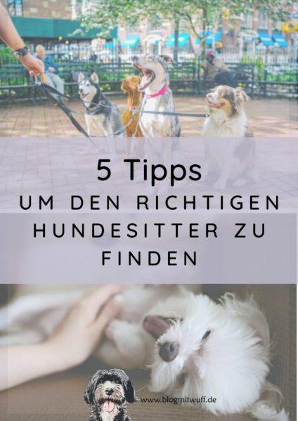 Titelbild zu 5 Tipps um den richtigen Hundesitter zu finden